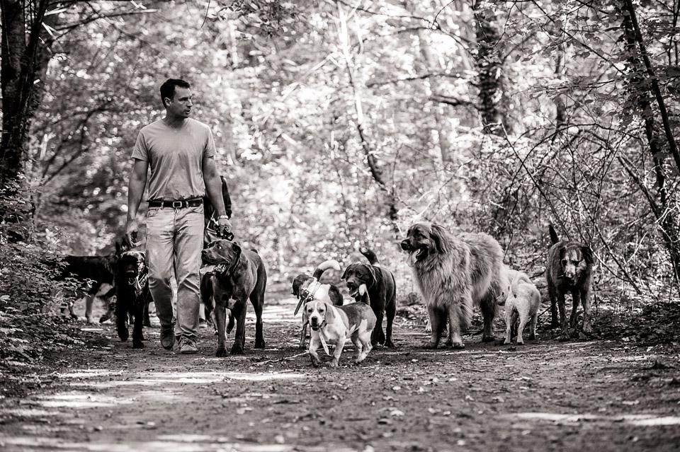 Promenade de chien dans la clairière