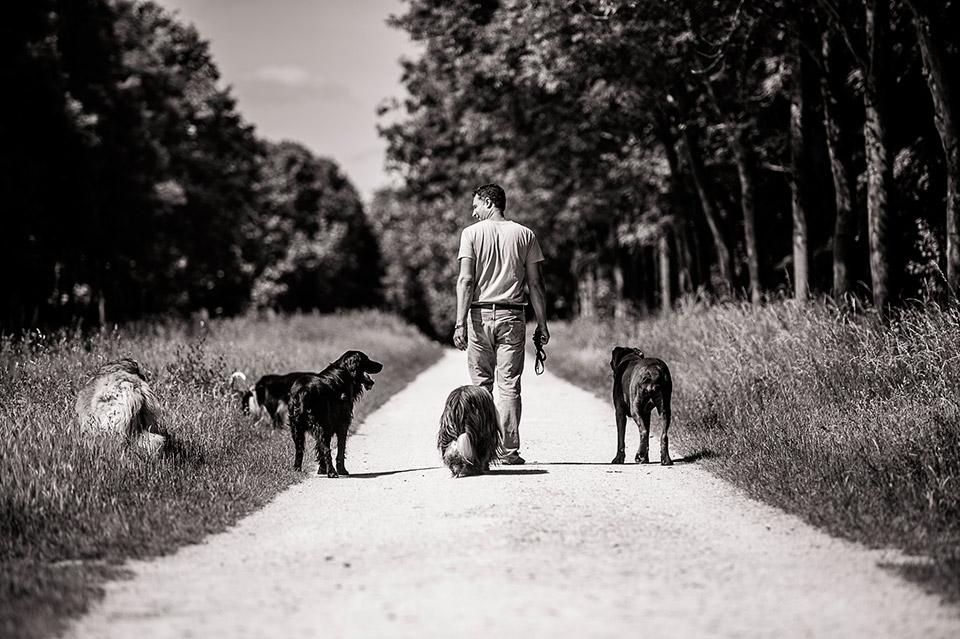 Promenade de chien au bois de Vincennes