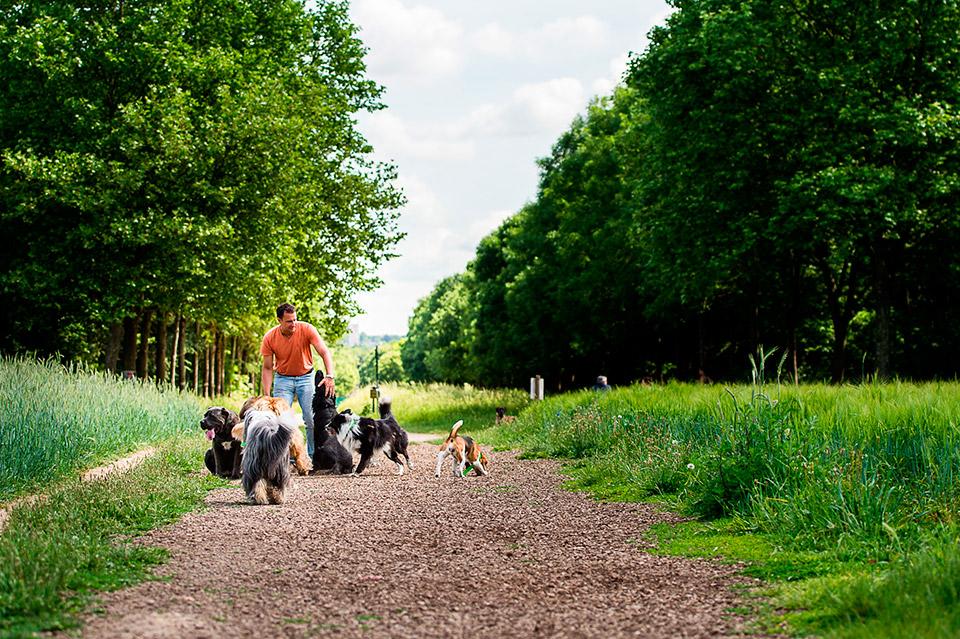 Promenade de chien sans laisse