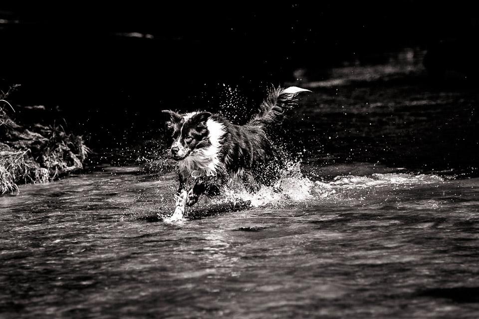 Action et défoulement de chien