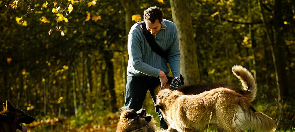 Promeneur de chiens professionnel au bois Vincennes 04