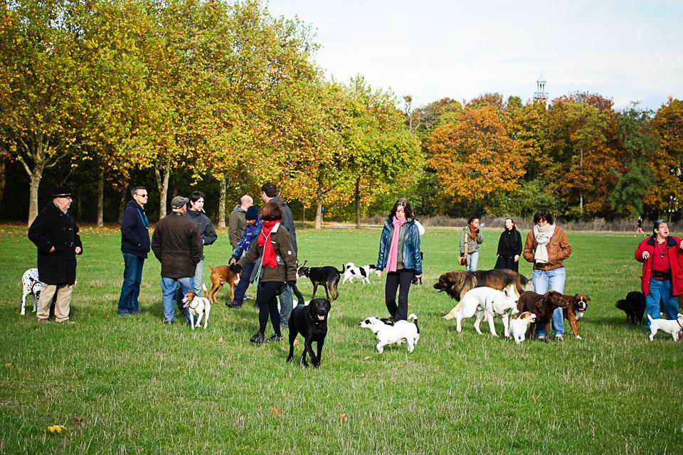 Promeneur de chiens professionnel au bois Vincennes