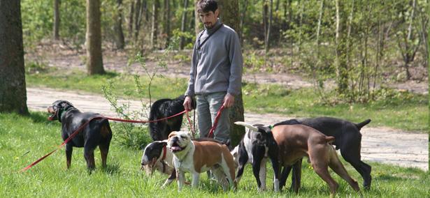 sortir son chien paris promenade de chiens promeneur professionnel de chien paris. Black Bedroom Furniture Sets. Home Design Ideas