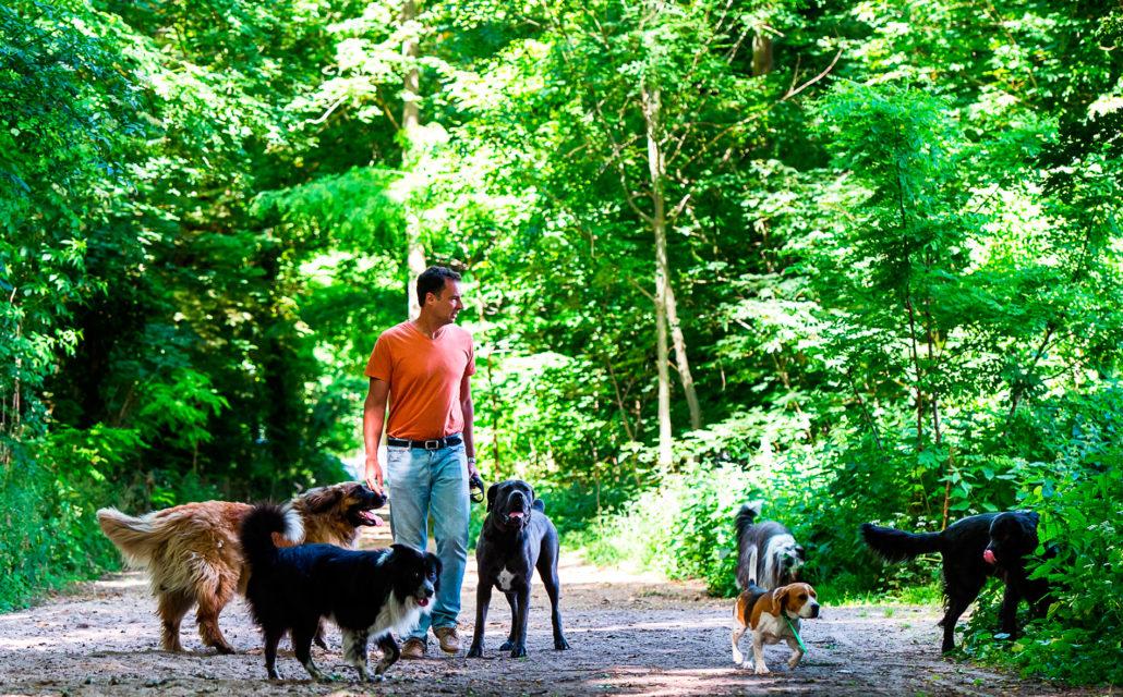 rencontre chien promenade