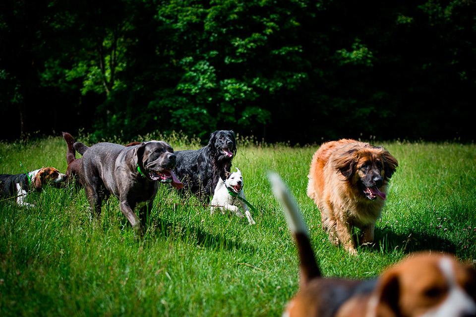 Divertissement des chiens en promenade