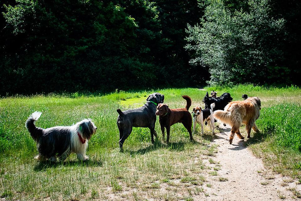 Diverses races canines paisiblement représentées