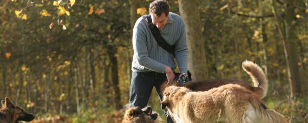 formation promeneur de chien paris