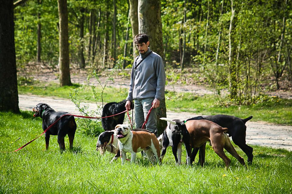 Promeneur de chiens professionnel au bois Vincennes 05