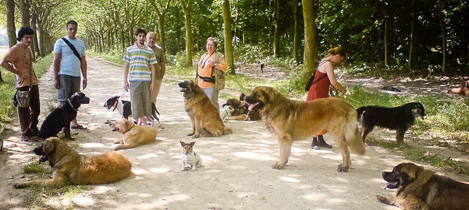 Promeneur de chiens professionnel au bois Vincennes 03