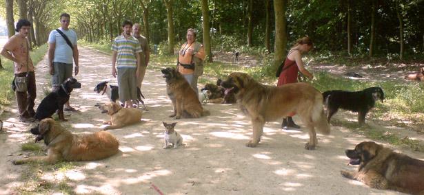 Sortir son chien - Promenade de chien à Paris